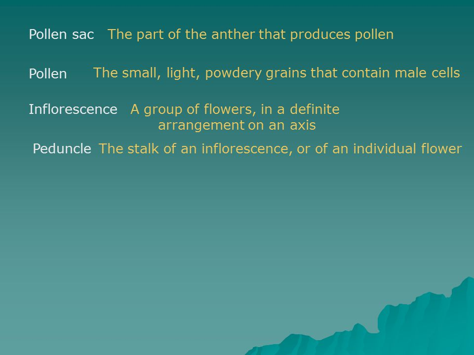 The part of the anther that produces pollen
