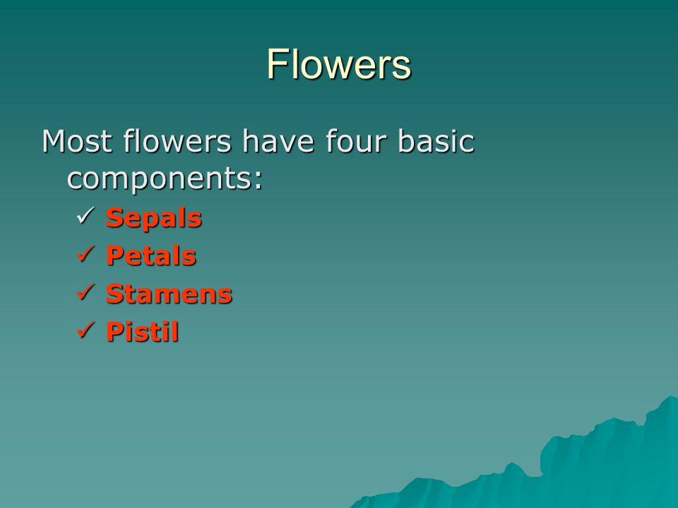 Flowers Most flowers have four basic components: Sepals Petals Stamens