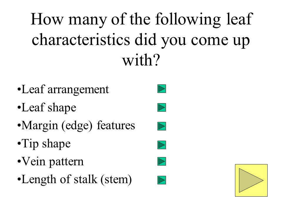 How many of the following leaf characteristics did you come up with
