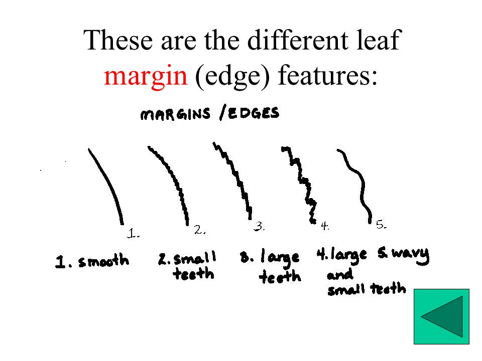 These are the different leaf margin (edge) features: