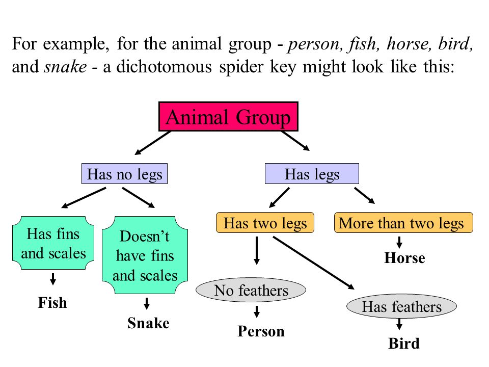 For example, for the animal group - person, fish, horse, bird,