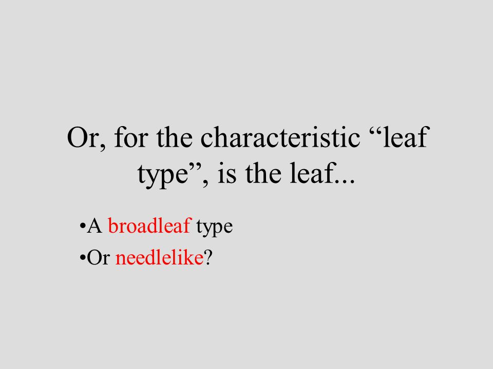 Or, for the characteristic leaf type , is the leaf...