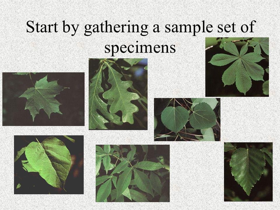 Start by gathering a sample set of specimens