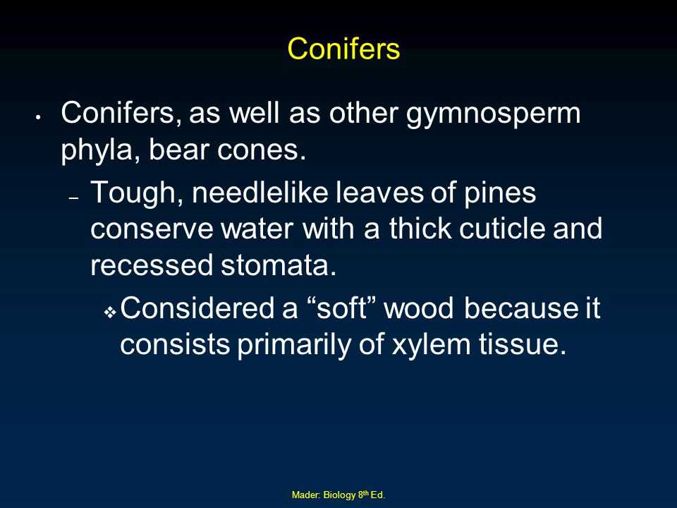 Conifers, as well as other gymnosperm phyla, bear cones.