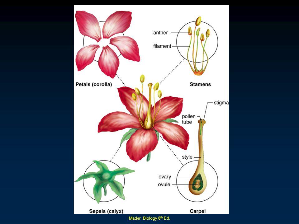 Mader: Biology 8th Ed.