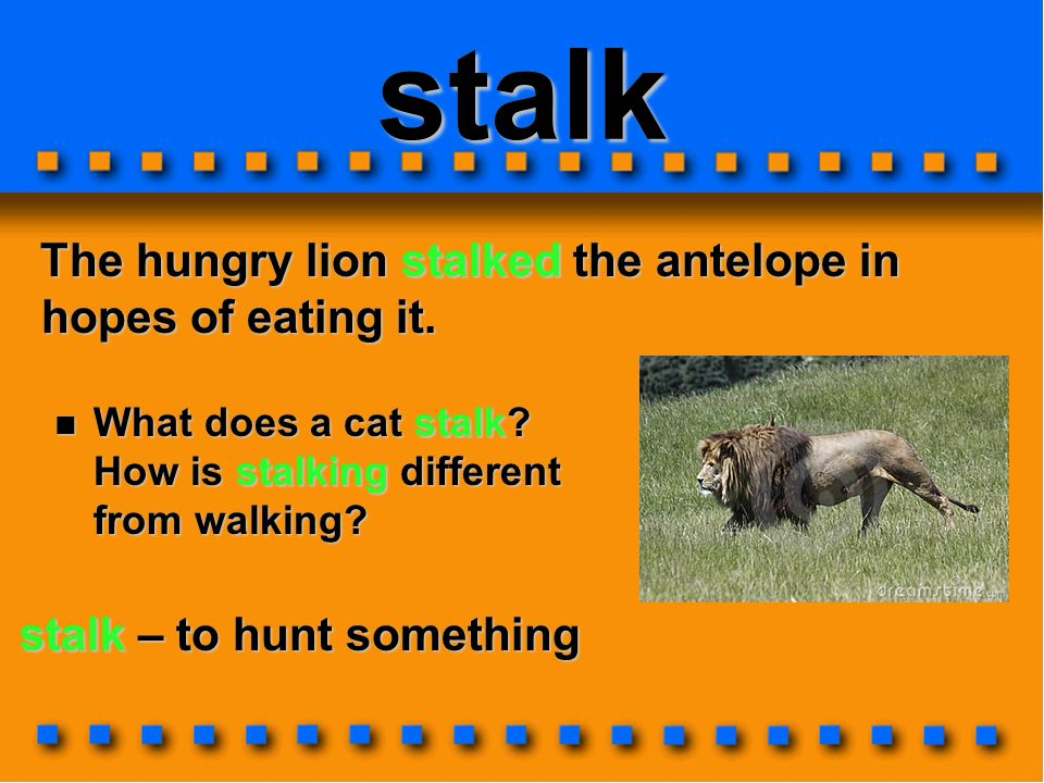 stalk The hungry lion stalked the antelope in hopes of eating it.