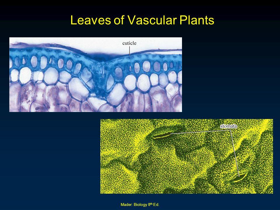 Leaves of Vascular Plants