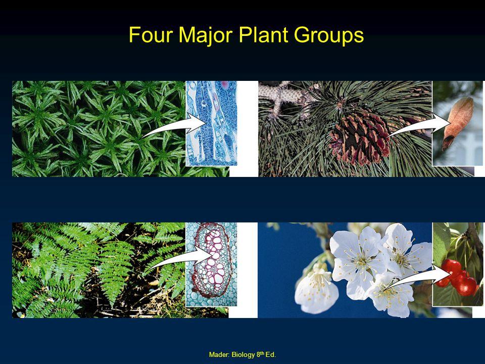 Four Major Plant Groups