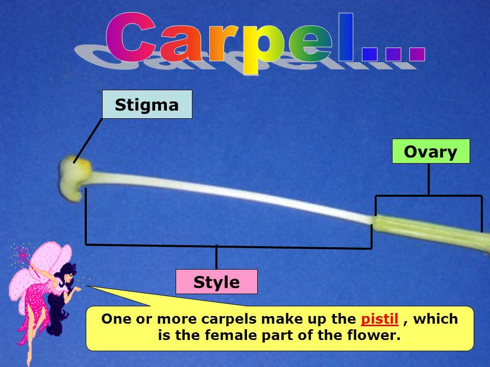 Carpel... Stigma Ovary Style