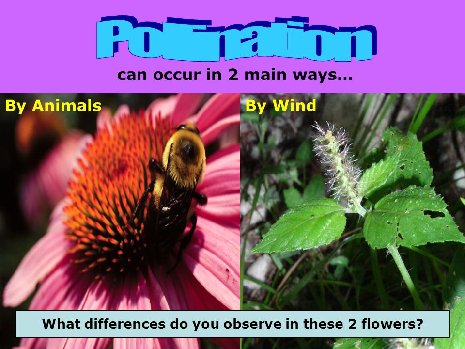 What differences do you observe in these 2 flowers