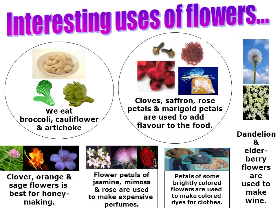 Interesting uses of flowers...
