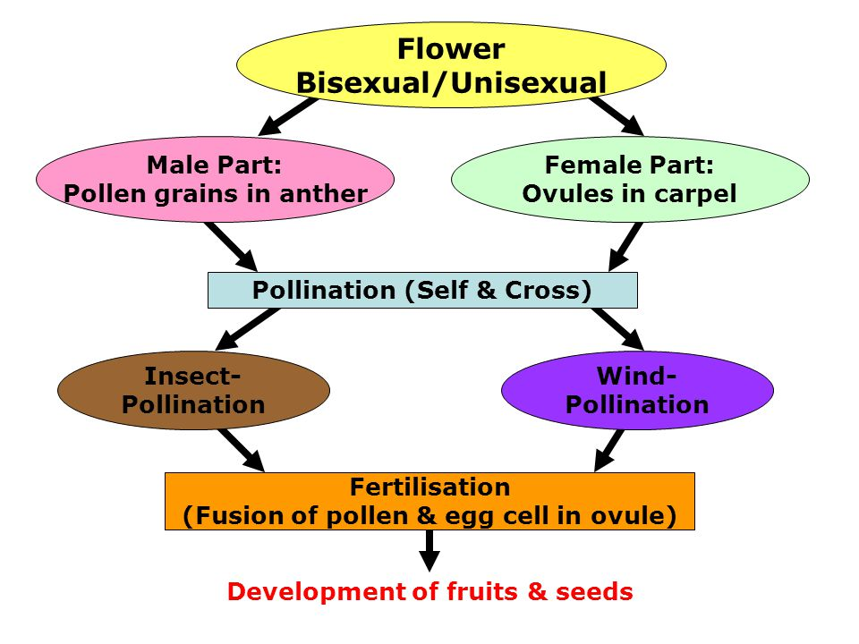 Flower Bisexual/Unisexual