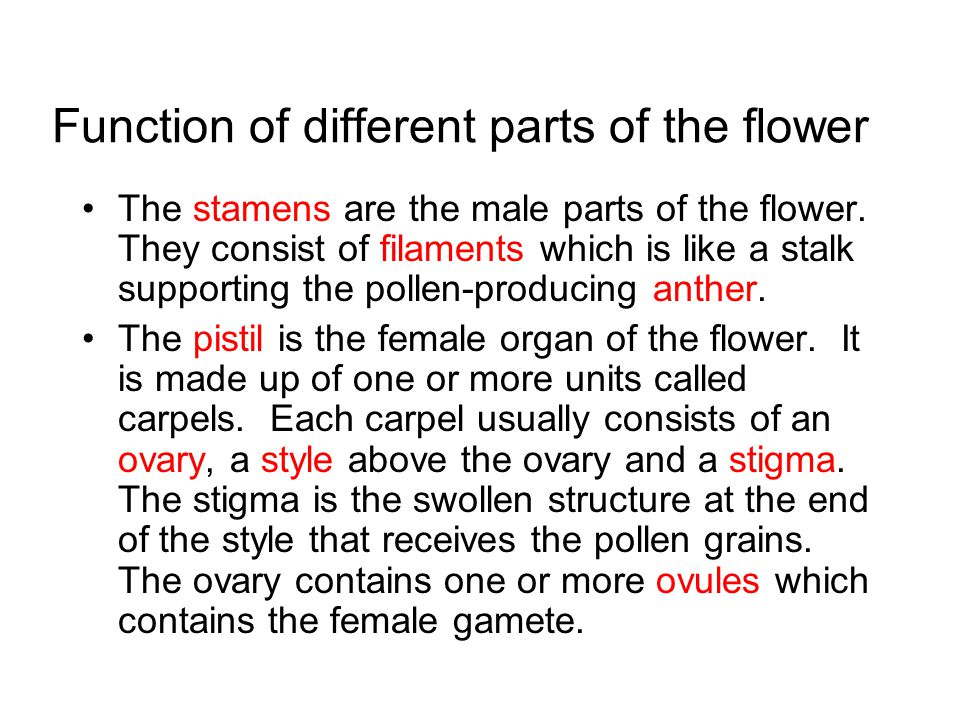 Function of different parts of the flower