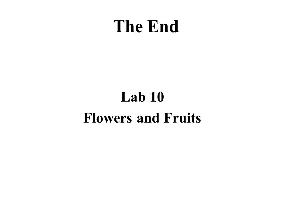The End Lab 10 Flowers and Fruits