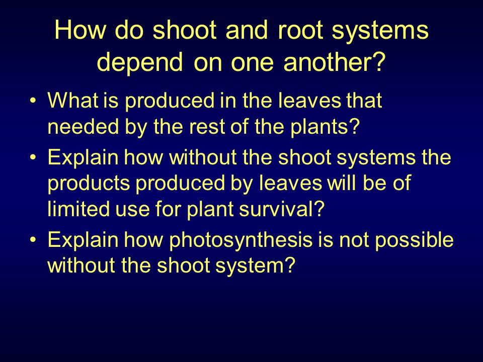 How do shoot and root systems depend on one another