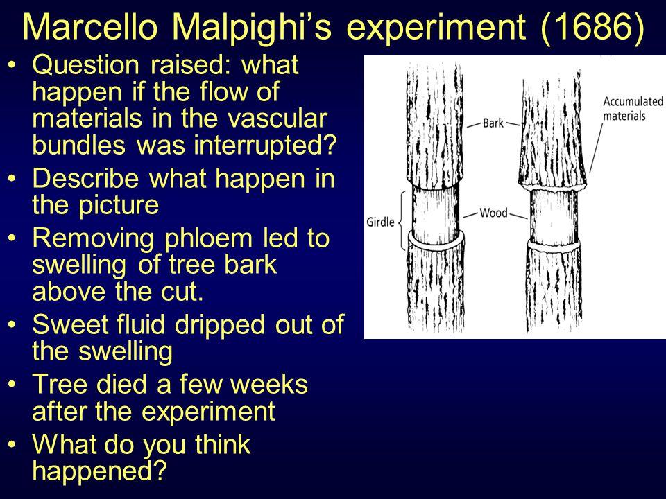 Marcello Malpighi's experiment (1686)