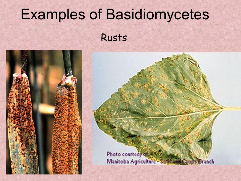 Examples of Basidiomycetes