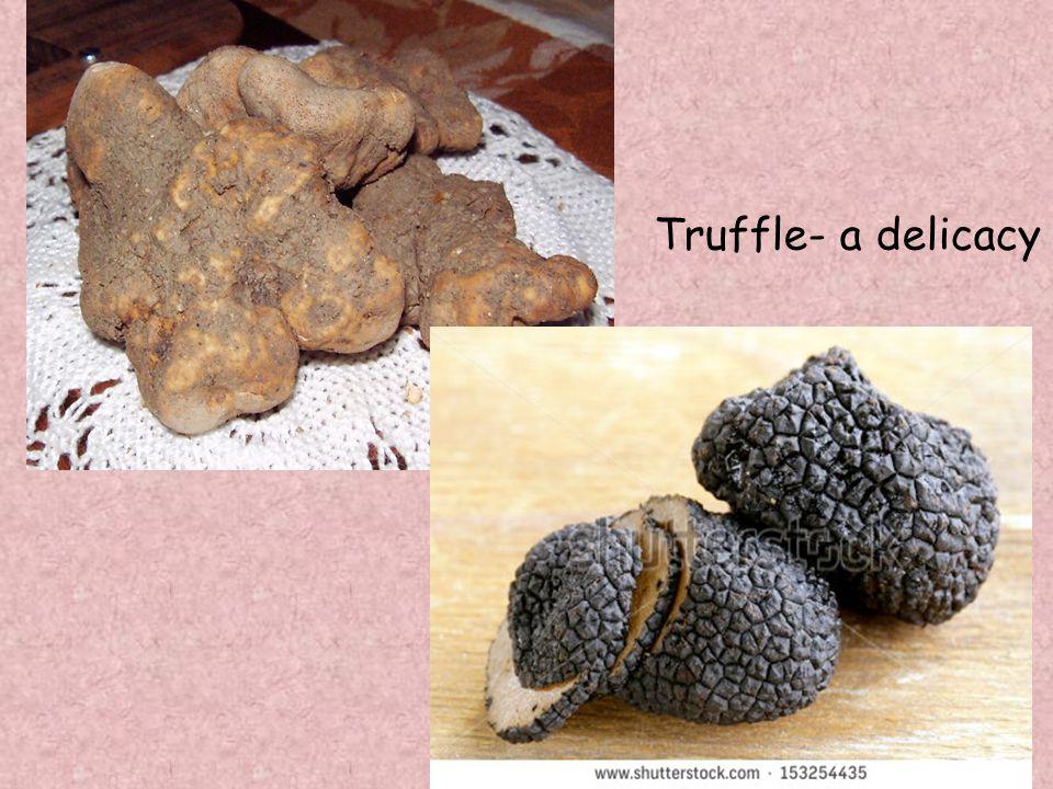 Truffle- a delicacy