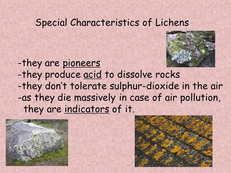 Special Characteristics of Lichens