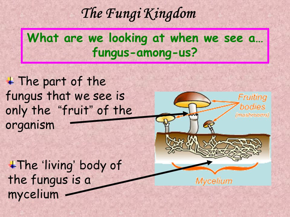 What are we looking at when we see a… fungus-among-us