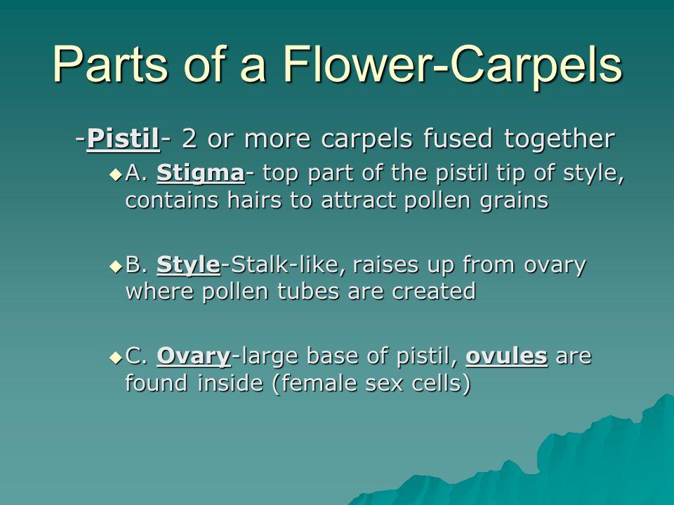 Parts of a Flower-Carpels