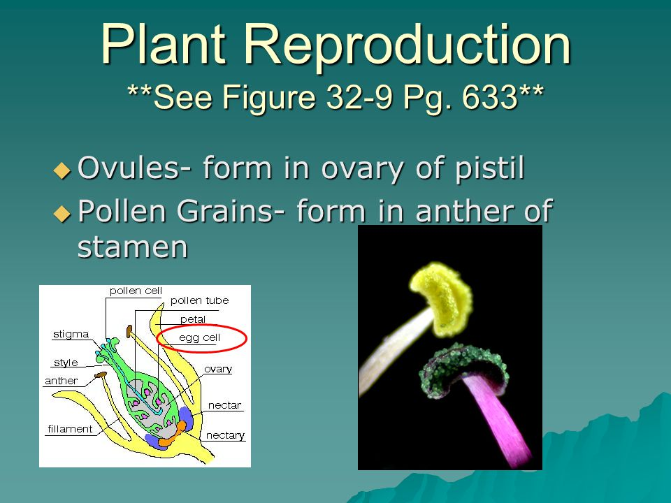Plant Reproduction **See Figure 32-9 Pg. 633**