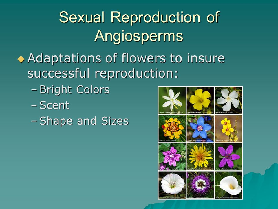 Sexual Reproduction of Angiosperms