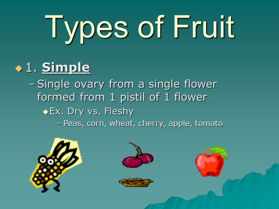 Types of Fruit 1. Simple. Single ovary from a single flower formed from 1 pistil of 1 flower. Ex. Dry vs. Fleshy.