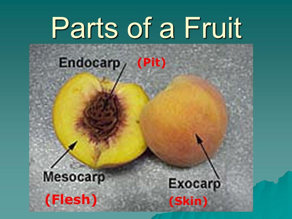 Parts of a Fruit (Pit) (Flesh) (Skin)