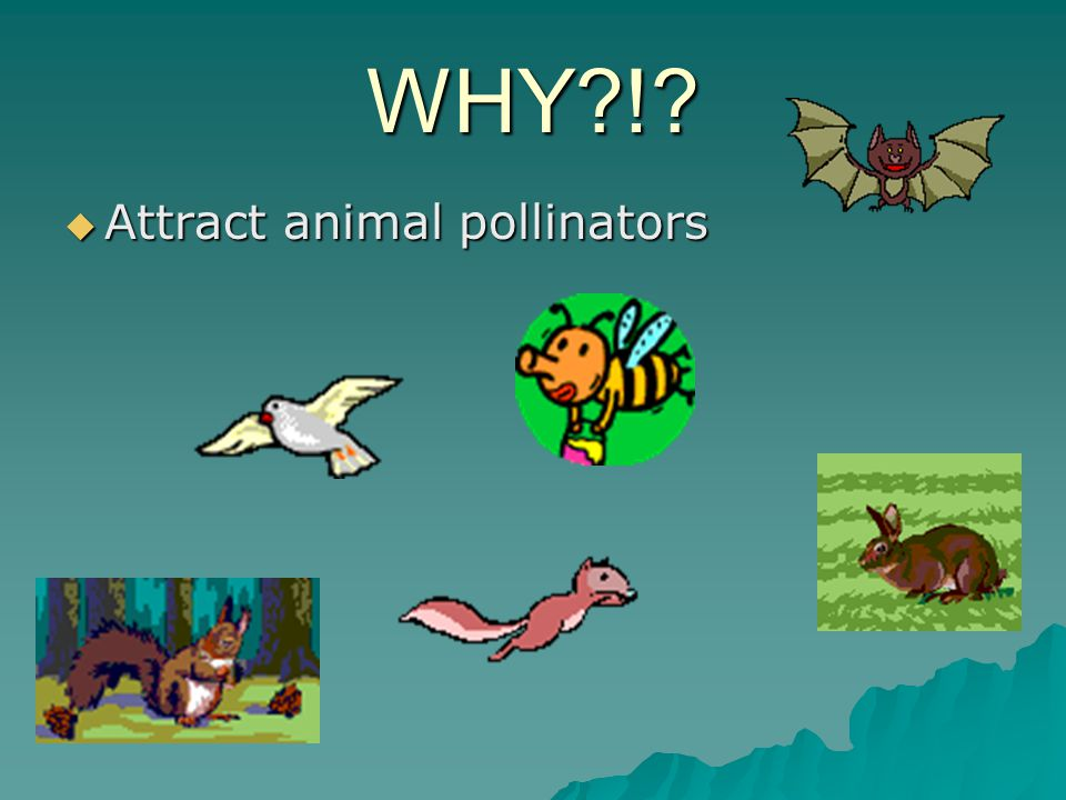 WHY ! Attract animal pollinators
