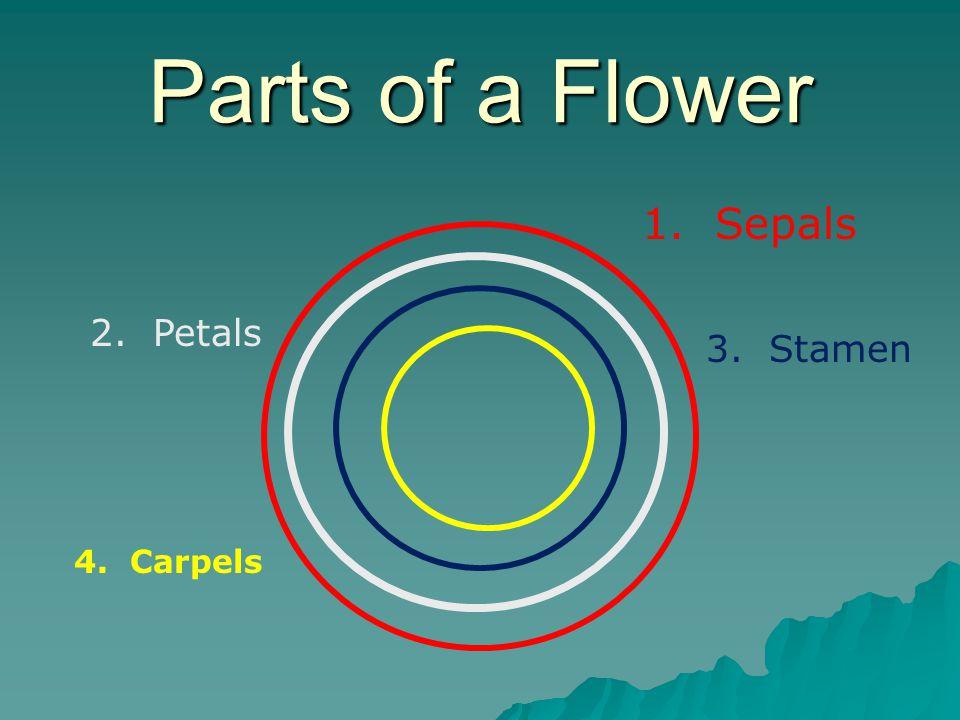Parts of a Flower 1. Sepals 2. Petals 3. Stamen 4. Carpels