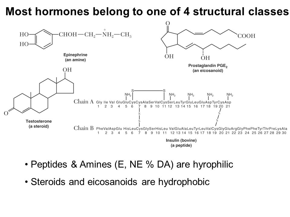 Most hormones belong to one of 4 structural classes