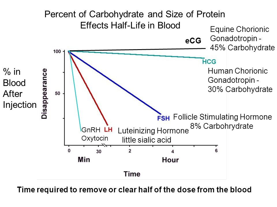 Percent of Carbohydrate and Size of Protein Effects Half-Life in Blood