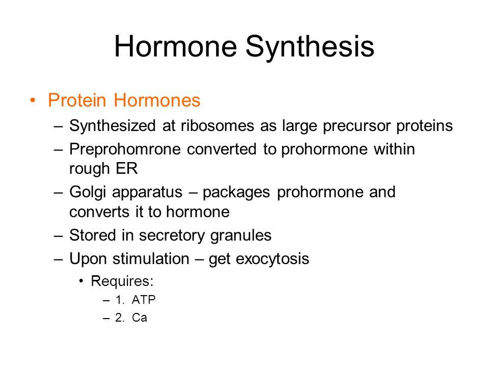 Hormone Synthesis Protein Hormones