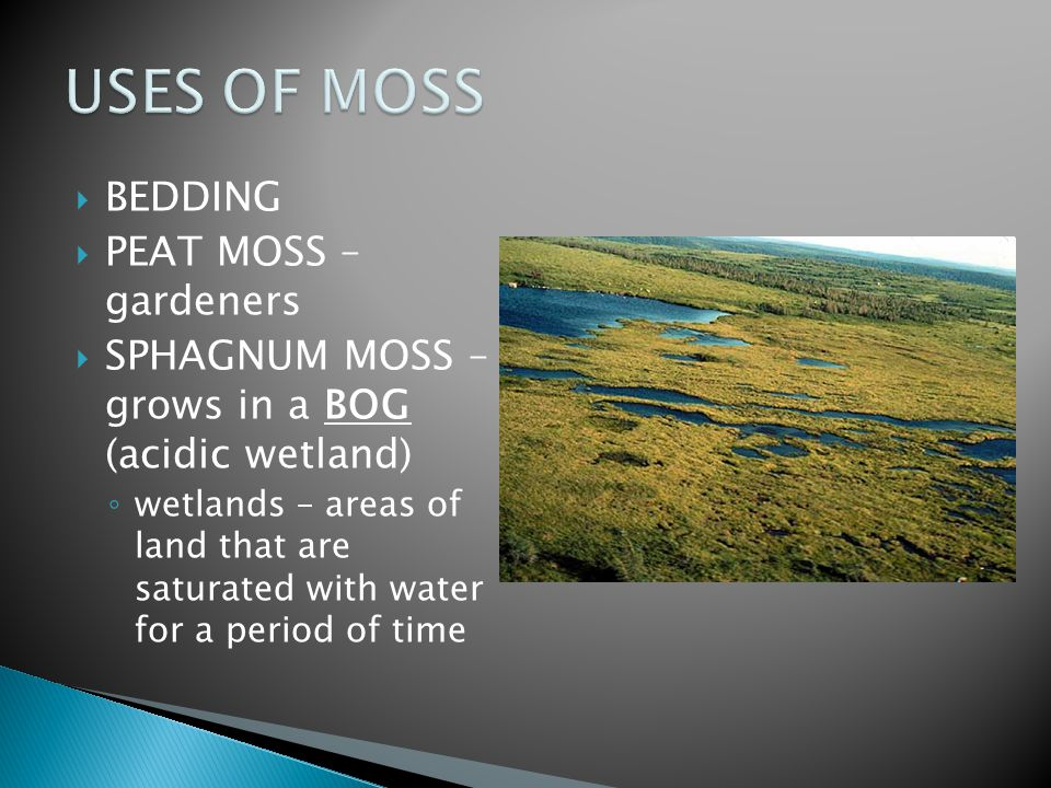 USES OF MOSS BEDDING PEAT MOSS – gardeners