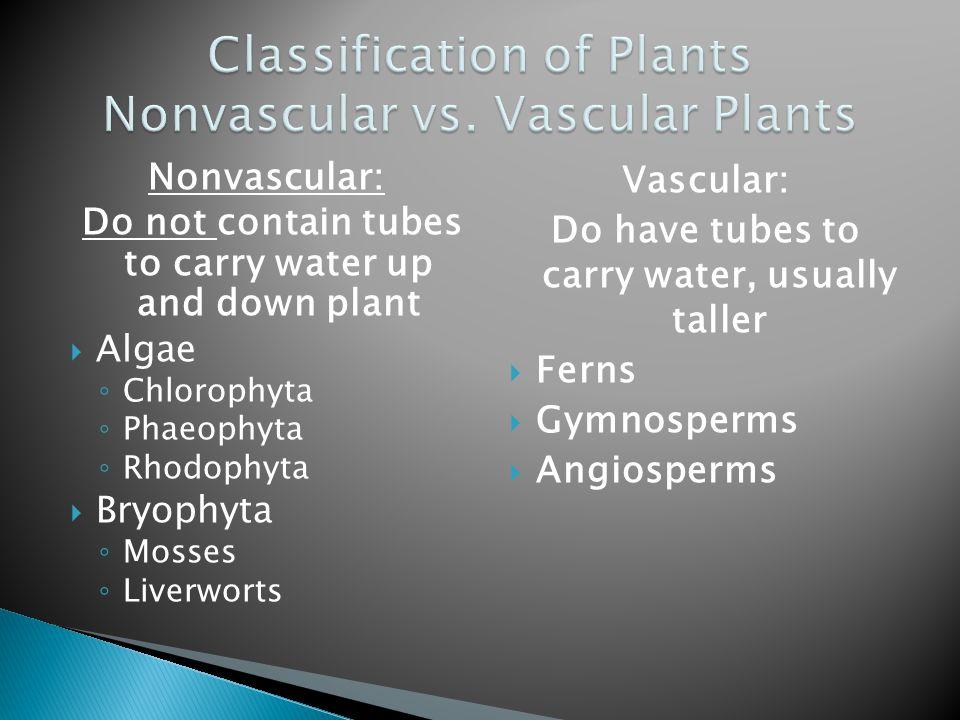 Classification of Plants Nonvascular vs. Vascular Plants