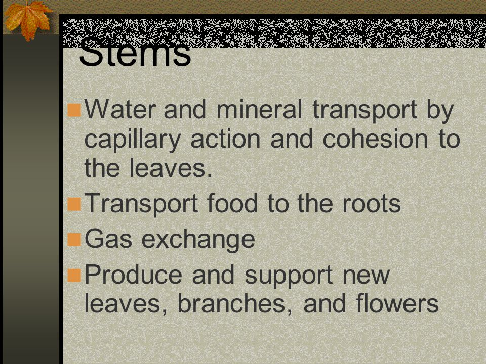 Stems Water and mineral transport by capillary action and cohesion to the leaves. Transport food to the roots.