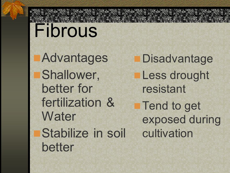 Fibrous Advantages Shallower, better for fertilization & Water