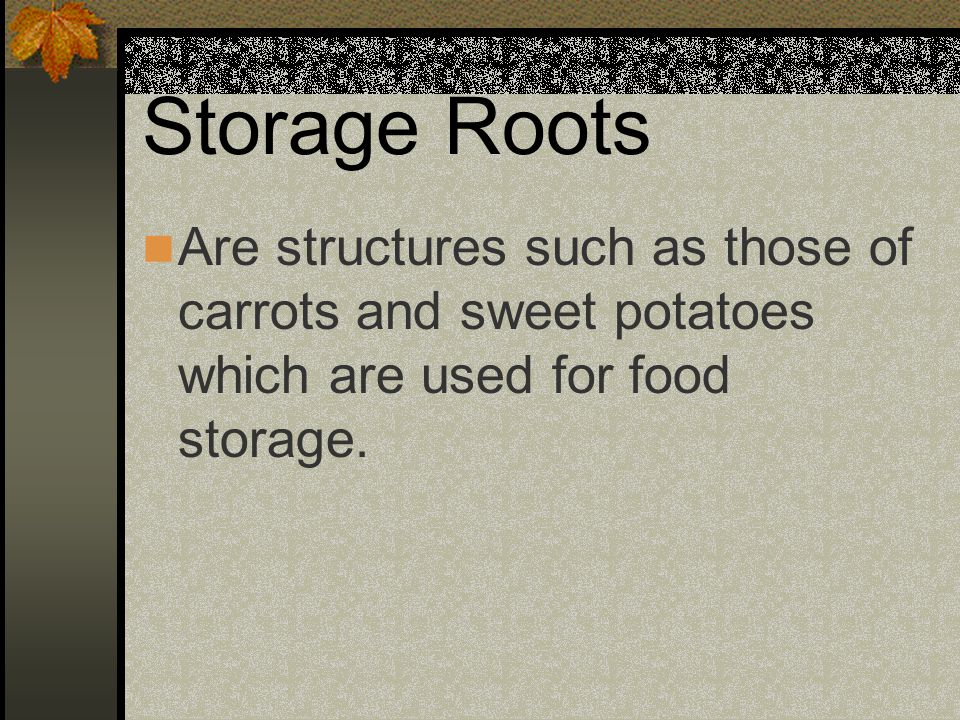 Storage Roots Are structures such as those of carrots and sweet potatoes which are used for food storage.