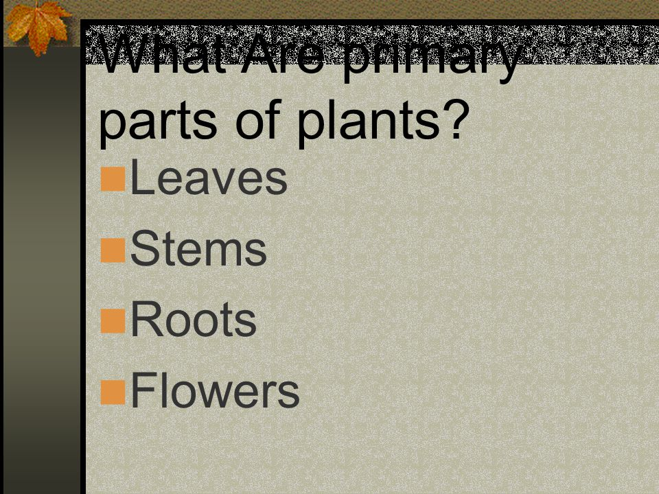 What Are primary parts of plants