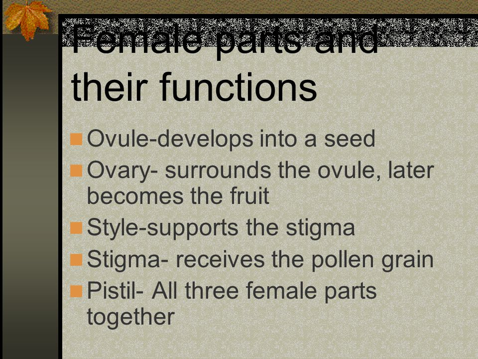 Female parts and their functions