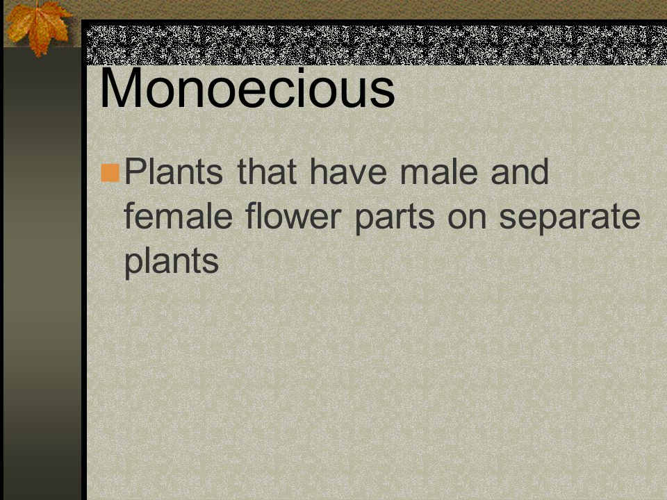 Monoecious Plants that have male and female flower parts on separate plants