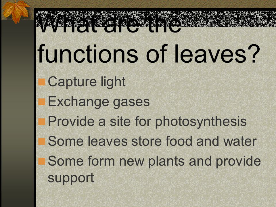 What are the functions of leaves