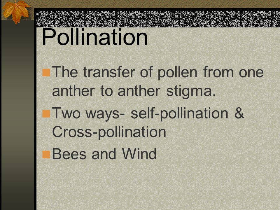 Pollination The transfer of pollen from one anther to anther stigma.