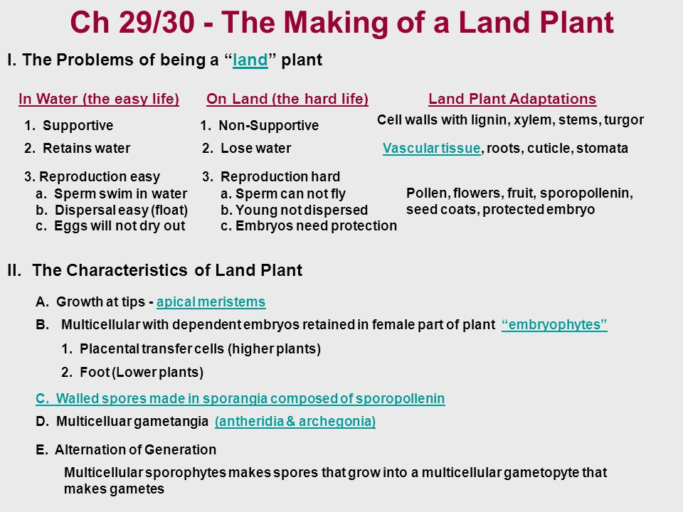 Ch 29/30 - The Making of a Land Plant