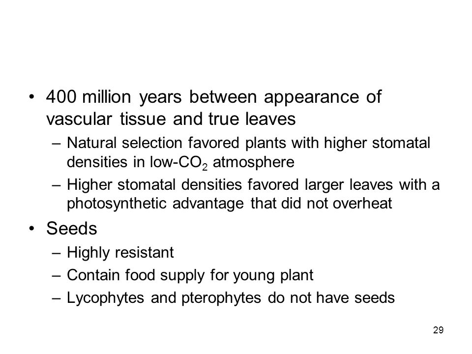 400 million years between appearance of vascular tissue and true leaves
