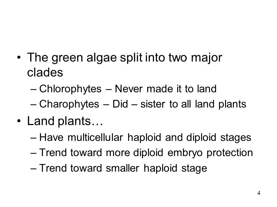 The green algae split into two major clades