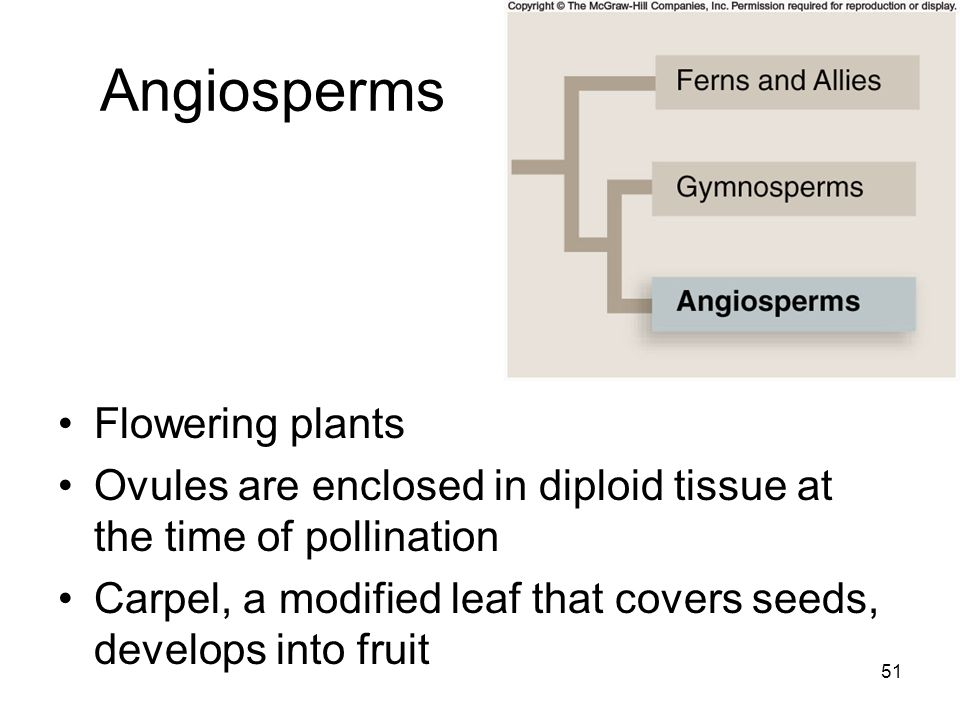 Angiosperms Flowering plants
