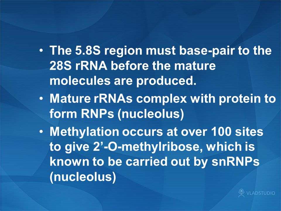 The 5.8S region must base-pair to the 28S rRNA before the mature molecules are produced.