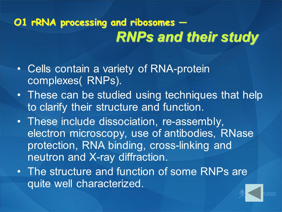 O1 rRNA processing and ribosomes — RNPs and their study
